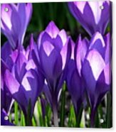 Luminous Floral Geometry Acrylic Print