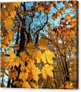Luminous Leaves Acrylic Print