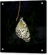 Luminous Paper Kite At Rest Acrylic Print