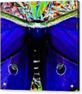Luna Moth Uv Pano Acrylic Print