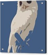 Luna The Rescued White Leucistic Eastern Screech Owl Abstracted Acrylic Print