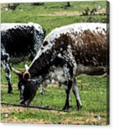 Lunch With A Friend Acrylic Print
