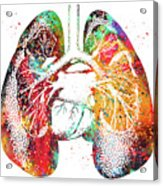 Lungs And Heart Acrylic Print