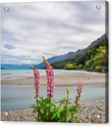 Lupin Flowers In Alpine Scenery At Kinloch, Nz. Acrylic Print