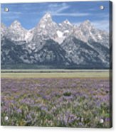 Lupine And Grand Tetons Acrylic Print by Sandra Bronstein