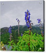 Lupine And Mountains Acrylic Print