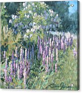 Lupine On Parade Acrylic Print by L Diane Johnson