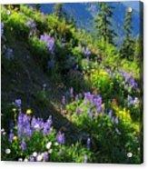 Lupine Slopes Acrylic Print