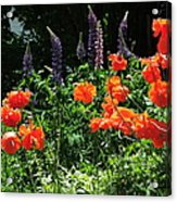 Lupines And Poppies Acrylic Print