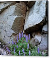 Lupines And Rock Face Acrylic Print