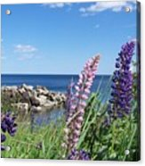 Lupines At Lake Superior Acrylic Print