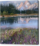 Lupines At Pilgrim Creek Acrylic Print