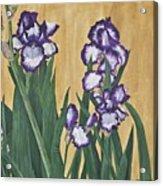 Luscious Iris Acrylic Print