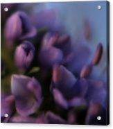 Luscious Lilac Acrylic Print by Bonnie Bruno