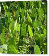 Lush Crop Leaves In A Field Acrylic Print