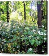 Lush Greens Acrylic Print