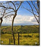 Lush Land Leafless Trees I Acrylic Print