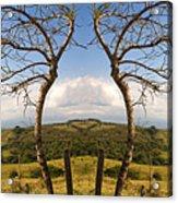 Lush Land Leafless Trees IIi Acrylic Print