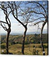 Lush Land Leafless Trees Iv Acrylic Print
