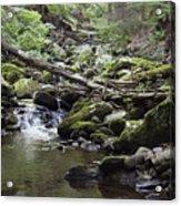 Lush Stream And Canopy Foliage Acrylic Print