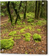 Lush Vegetation Acrylic Print