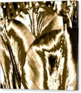 Lustrous Golden Tulip Acrylic Print