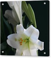 Lustrous Lilies Acrylic Print
