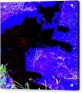 Luxury Cat Acrylic Print