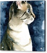 Lynx Point Cat Portrait Acrylic Print
