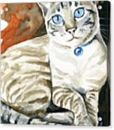 Lynx Point Siamese Cat Painting Acrylic Print
