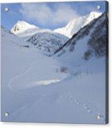 Lynx Tracks In A Mountain Pass Acrylic Print