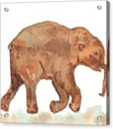 Lyuba The Ice Baby Mammoth  Acrylic Print