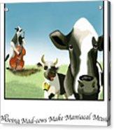 Mooing Mad Cows Acrylic Print