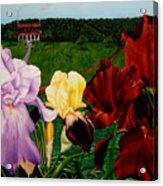 M S  O S Irises 2  Acrylic Print