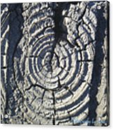 M Scored Into A Log Acrylic Print