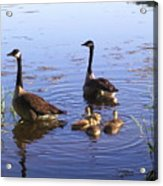 Ma N Pa Geese And All The Little Ones Acrylic Print