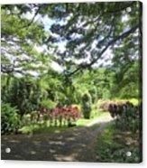 Macadamia Road Acrylic Print