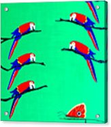 Macaw Ladder Acrylic Print