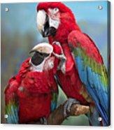 Macaw Love Acrylic Print