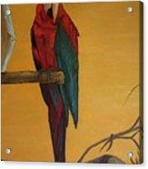 Macaw Of The Canary Island Acrylic Print