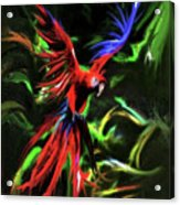 Macaw Parrot  Acrylic Print