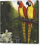 Macaws And Lillies Acrylic Print