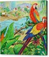 Macaws Acrylic Print