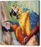 Macaws In The Sunshine Acrylic Print