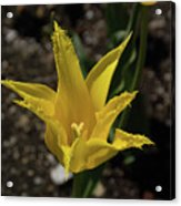 Mackinac Island Flowers 10663 Acrylic Print