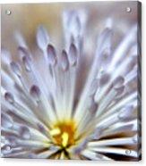 Macro Flower 3 Acrylic Print