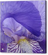 Macro Irises Close Up Purple Iris Flowers Giclee Art Prints Baslee Troutman Acrylic Print