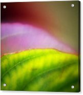 Macro Leaf Acrylic Print