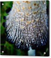 Macro Mushroom Acrylic Print