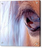 Macro Of Horse Eye Acrylic Print by Anne Louise MacDonald of Hug a Horse Farm